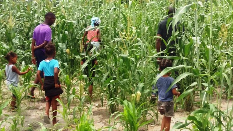 nahm sie mich mit auf eines ihrer zwei großen Felder, hier mit Mais und Mahango.