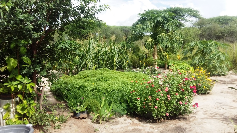 Blumen, Mais und Papaya