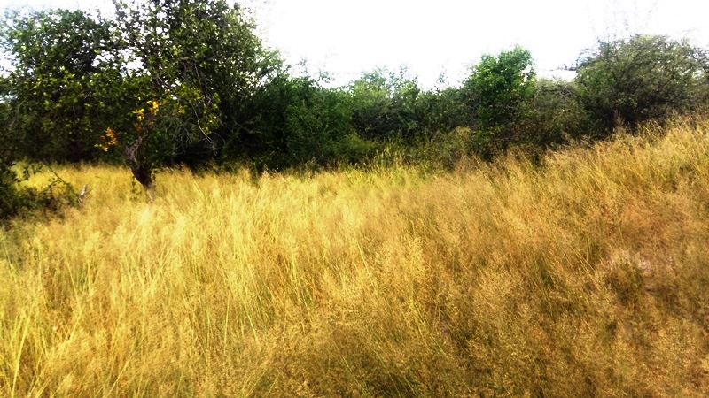 Bushman Trail 1