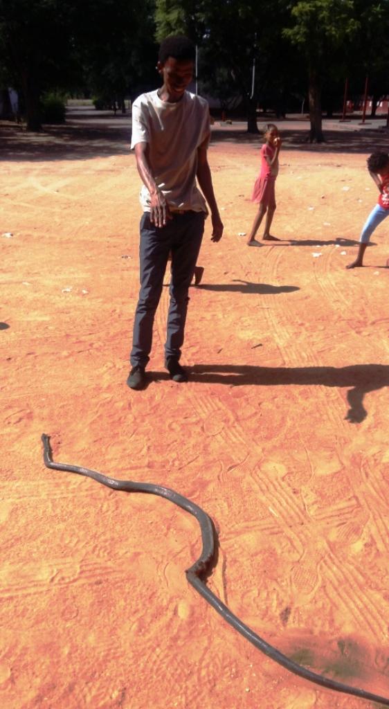 Cobra bis zur schwarzen Mamba eine breite Palette