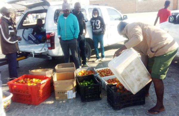 Tomaten für Tsumeb